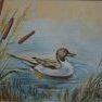 Le canard aux roseaux [Pastel - 24 x 30]