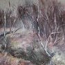 Le bois des bouleaux [Huile sur toile - 61 x 50]